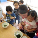 食育:わかめ戻し 1歳児