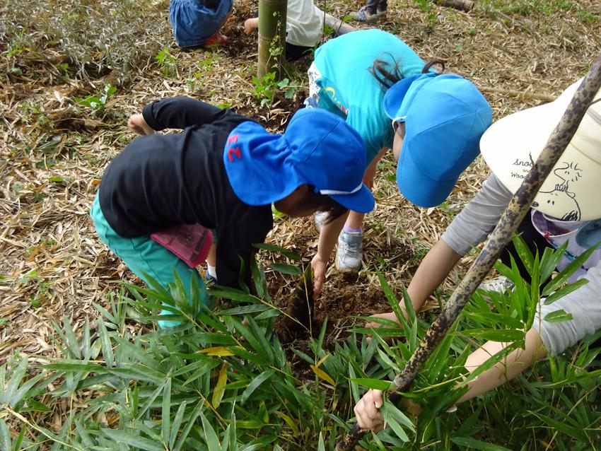 たけのこ掘り(5歳児)